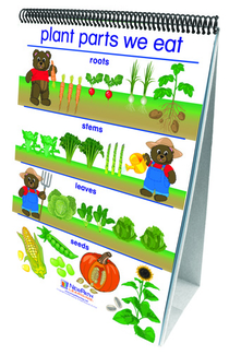 Picture of Flip charts all about plants early  childhood science readiness