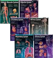 Human body chart pack