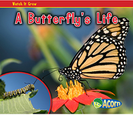 A butterflys life