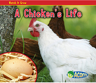 A chickens life