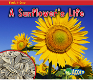 A sunflowers life