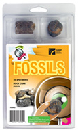 Explore with me geology fossils set