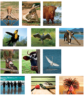 Amusing animals language cards