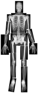 True to life human x-rays