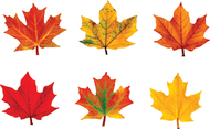Classic accents maple leaves mini  variety pk-discovery