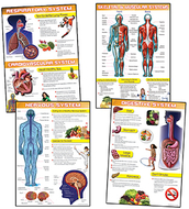 Human body and health tips bb set