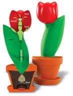 Cross section flower model